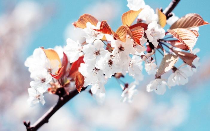 flor-rara