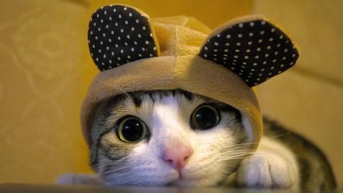 o que seu gato diz sobre sua personalidade