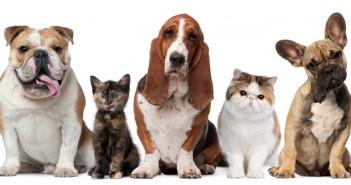o que seu animal diz sobre sua personalidade